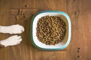Barking Heads Dog Food Review