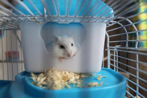 Pawhut Hamster Cage Review – The Complete Guide