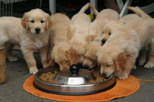 Skinners Puppy Food Review