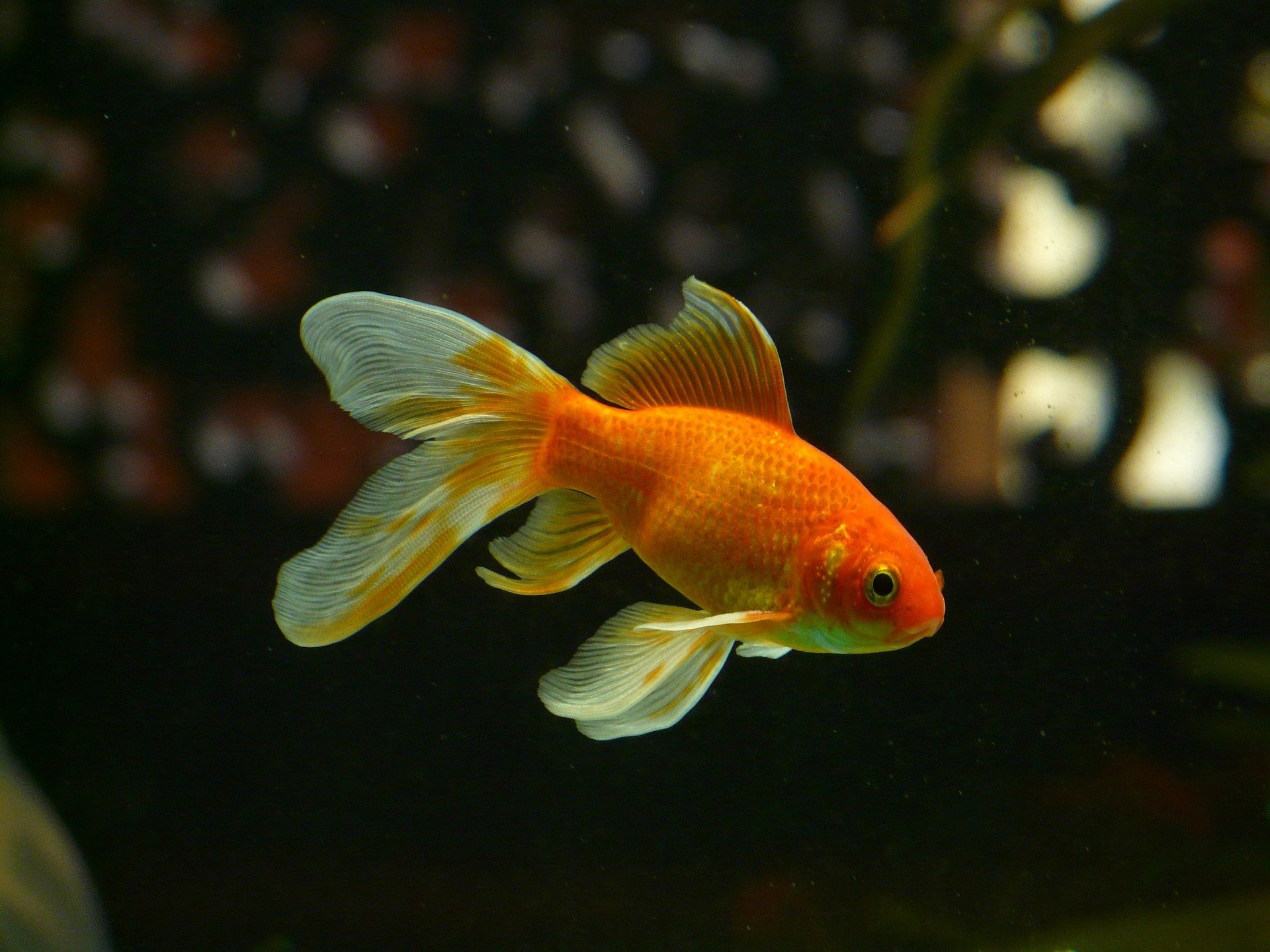 What Is The Best Gold Fish Tank?