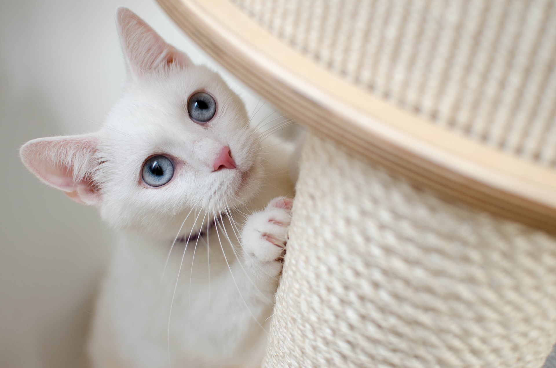 What Are The Best Cat Scratching Posts Available In The UK?