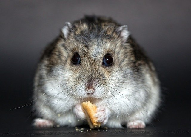 Best Hamster Food UK