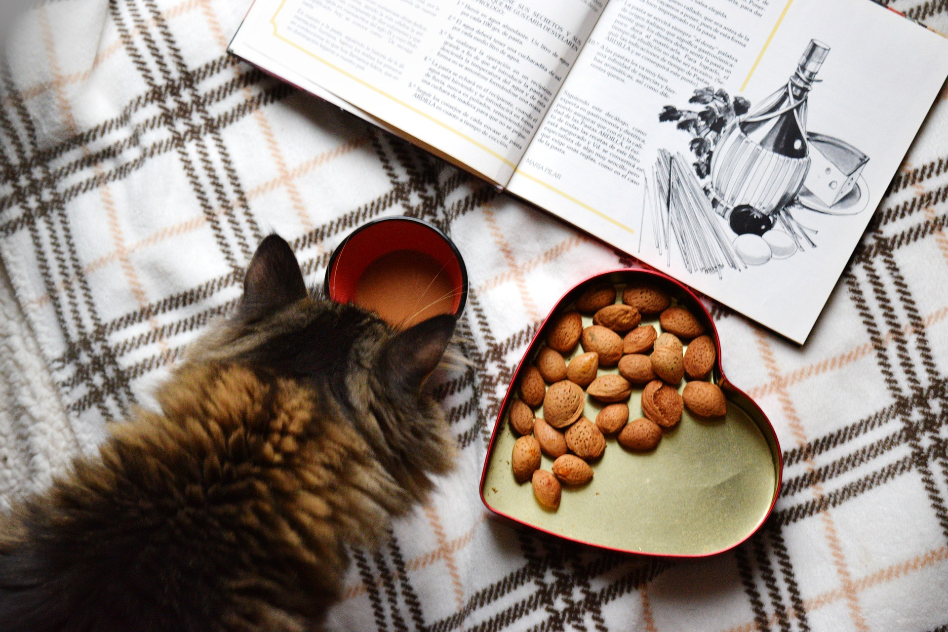 What Are The Most Nutritious Cat Foods?
