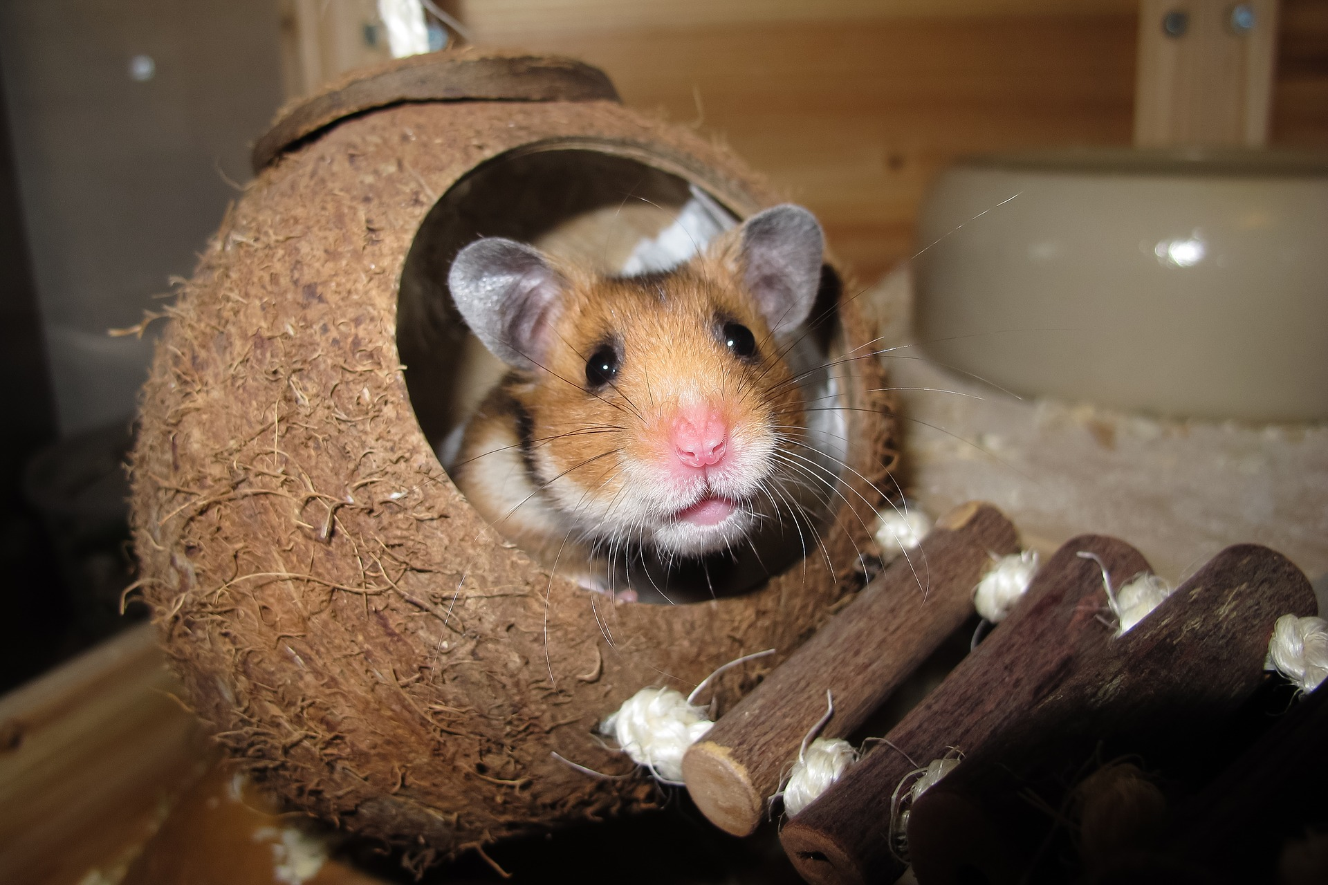 What are the best Syrian & Dwarf Hamster Cages in the UK?
