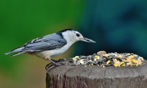 What Are The Best Bird Feeders? The Complete Guide to Buying a Bird Feeder