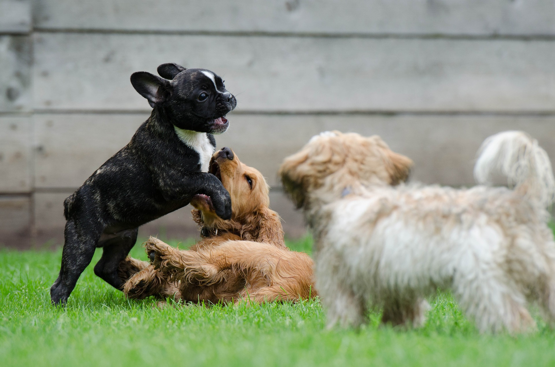 What is the Best Puppy Playpen available in the UK?